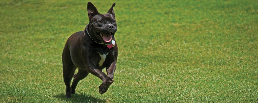 Molly runs playfully in her backyard.